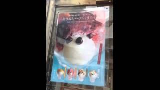 女子動画ならC CHANNEL http://www.cchan.tv テレビでも紹介されていた恵比寿にある、くまちゃんかき氷や和風アイスが有名なお店、JAPANESE ICE OUCAに行っ...