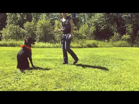 How To Scent Train Your Dog