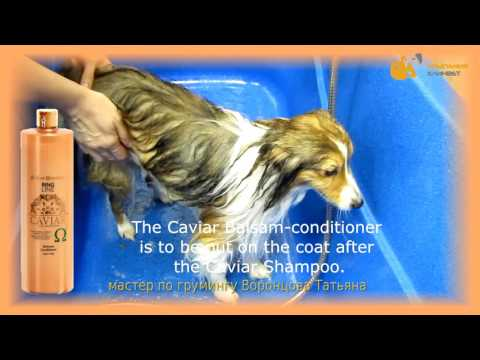 THOR - ISB Caviar Line 10 April 2016 Dog Profi Conference ENGLISH subtitles