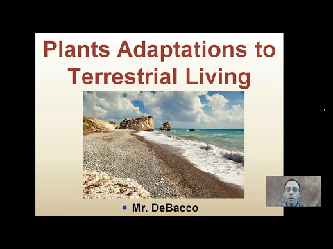 Plant Adaptations to Terrestrial Living
