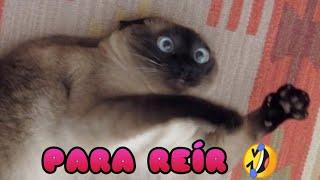 Videos de Risa de Animales  Perros y Gatos Chistosos