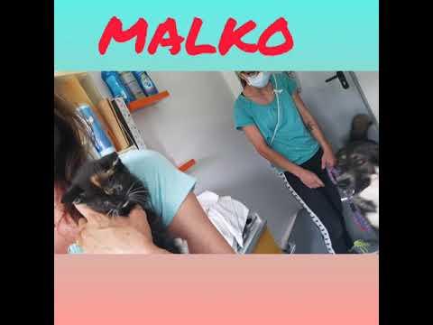 Malko con perros y gato