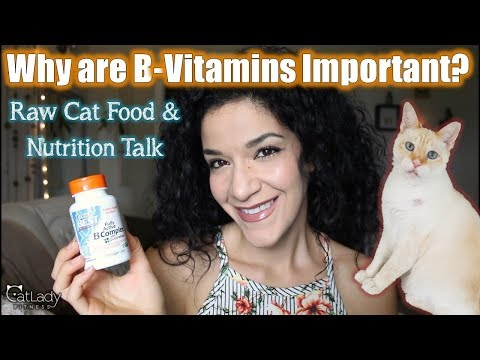 b-vitamins-&-cats:-why-are-they-important-(and-why-do-you-add-supplements-to-homemade-raw-cat-food)?