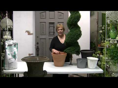 How To Pot Spiral Topiary For Outdoor Or Indoor Use