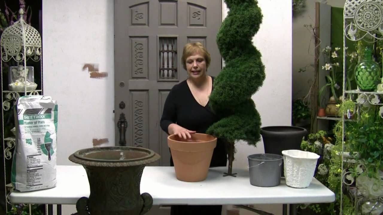 How To Pot A Spiral Topiary For Outdoor Or Indoor Use ...