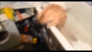 Funny Cats Compilation Most See Funny Cat Videos Ever Part 1