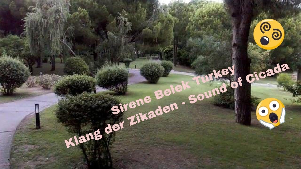 Zikaden Sound