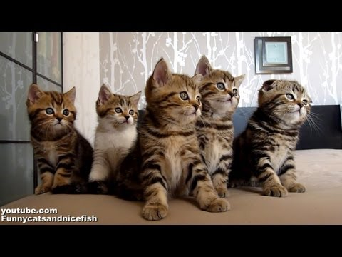 Funny Cats Choir | Dancing Chorus Line of Cute Kittens