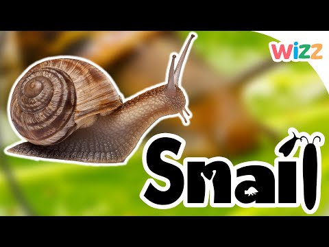 Snails For Kids