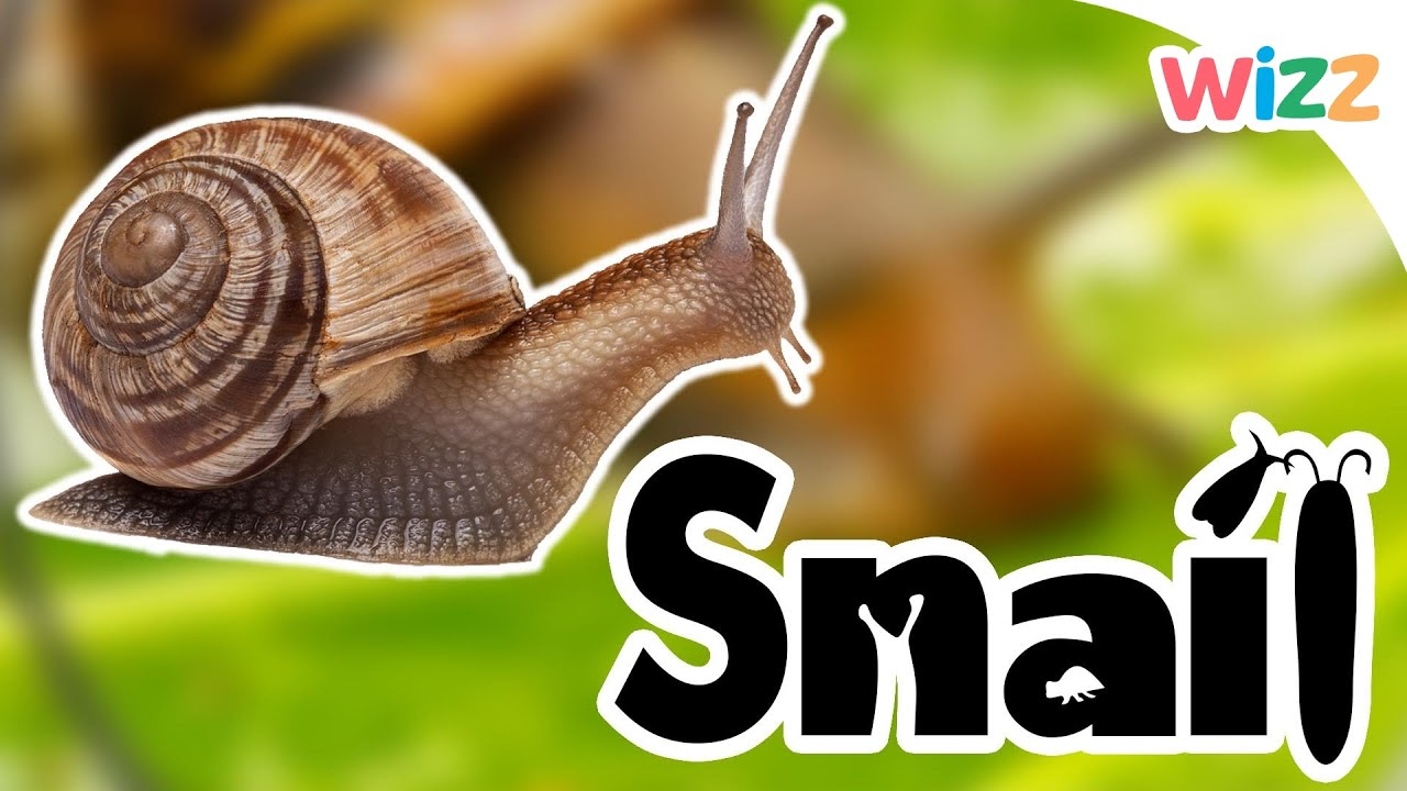 Snails For Kids - YouTube