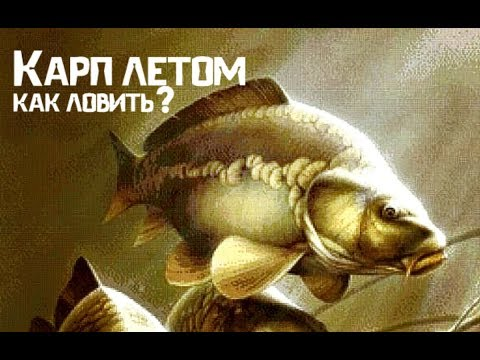Общие советы по рыбалке на карпа летом!