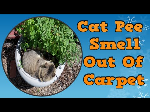 cat pee smell out of carpet home remedies for cat pee how to get rid of a cat smell rid cat. Black Bedroom Furniture Sets. Home Design Ideas