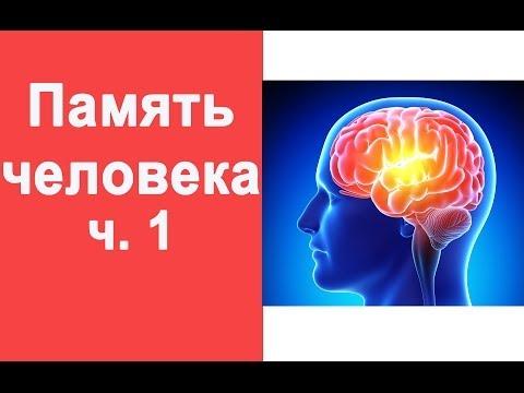 Память человека. Что необходимо знать ч.1