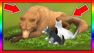 СИМУЛЯТОР ВОЛКА #14 РОДИЛСЯ ВОЛЧОНОК Жизни Зверей WildCraft про котят лис собак ДЕТСКИЕ ИГРЫ