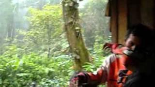 Mesum di gubuk tengah hutan