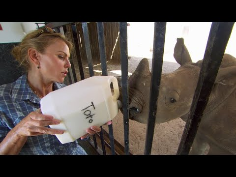 How to bottle-feed a baby rhino