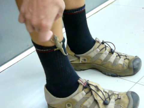 P1330503 Gecko on a hairy human leg
