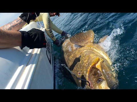 MAN vs. BEAST!!! Goliath Grouper Fishing...