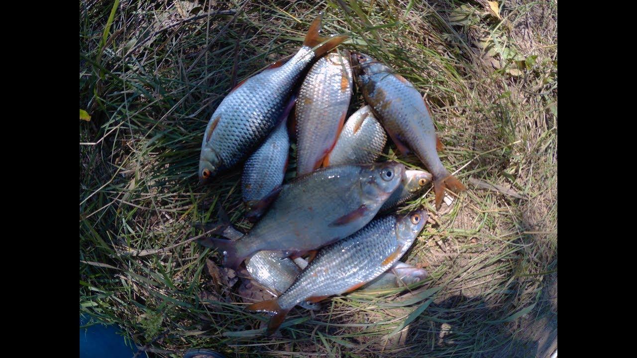 Ловля плотвы летом на поплавочную удочку. Ловля плотвы в июле
