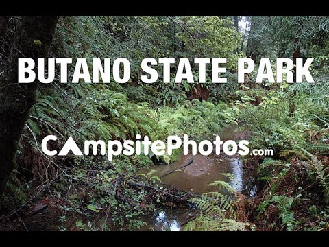 Butano State Park, California Campsite Photos - YouTube
