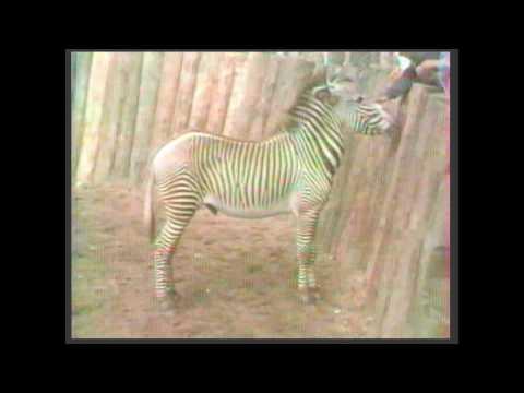 1984-Zoo de la Palmyre en Charente-Maritime