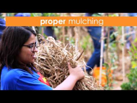Creating forest using Miyawaki Method of Tree Plantation