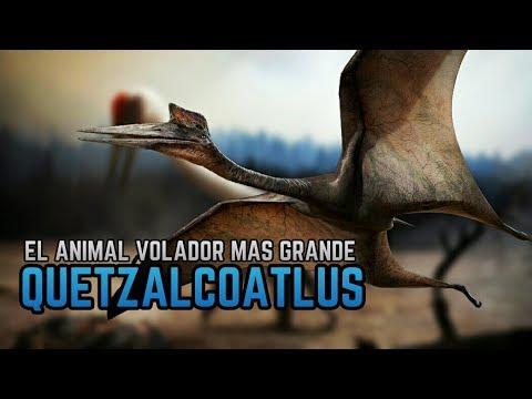 El QuetzalCoatlus el Animal Volador más Grande Que Existió