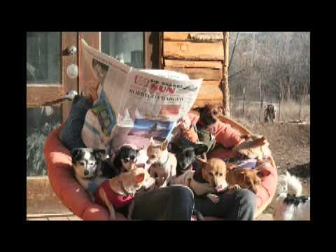 a-small-furry-hope---dog-rescue-and-the-meaning-of-life-by-steven-kotler