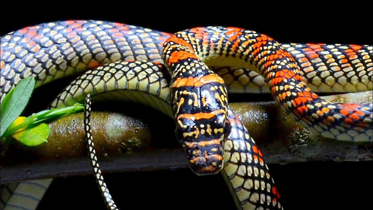 These Are The Most Terrifying Snakes In The World Youtube