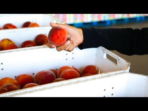 CA Controlled Atmosphere Keeps Fruit Fresher Longer