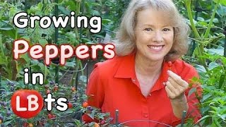Growing Peppers in Pots | Late Bloomer | Episode 15