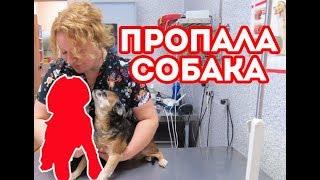 Как я потеряла собаку. Что делать когда собака потерялась?!