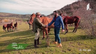 დიდი სანახაობა #ფერმაში - როგორ და რა მიზნით შეიძლება მოვაშენოთ ცხენების რემა