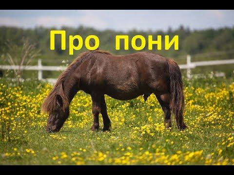 Как ухаживать за пони