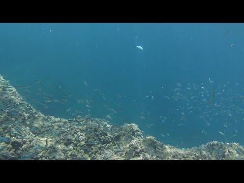 GoPro Mallorca 2016 - Fish In The Sea