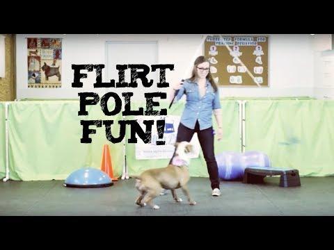 flirt pole work dogs international llc
