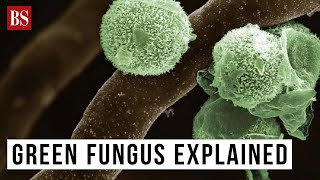 Green Fungus explained: Causes, symptoms and everything we know so far