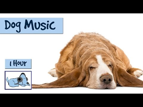 1 Hour of Music for your Dog's Ears! Treat Him Today!