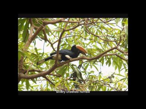 185 soorten vogels in Kenia en Tanzania