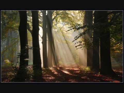 Through The Trees - David Tolk