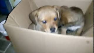 собаки в коробке в добрые руки