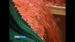 Ударные показатели. Холодильные мощности Мурманского морского рыбного порта заполнены креветкой