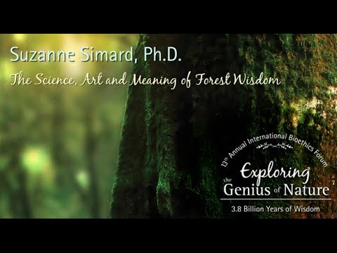 The Science, Art and Meaning of Forest Wisdom - Suzanne Simard, Ph.D.