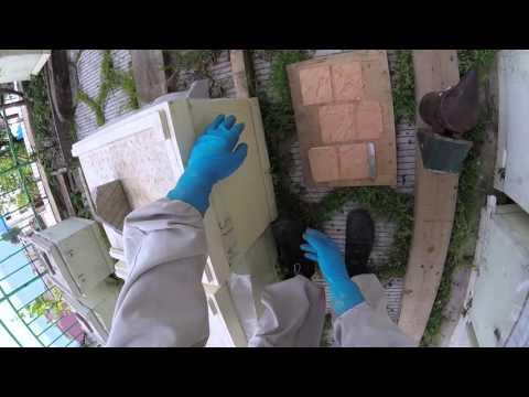 Паста Мельника профилактика и лечение заболеваний пчел