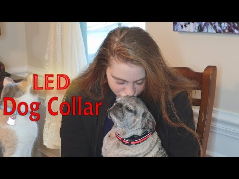 🐶KAMILEO LED DOG COLLAR Flashing Lights (Night Safety) BEST PET COLLAR Review 👈