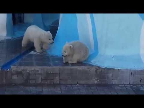 Медвежата резвятся........