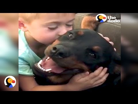 Rottweilers Give Little Boy Biggest Kisses | The Dodo