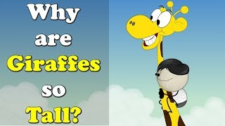 Why are Giraffes so Tall? | #aumsum #kids #education