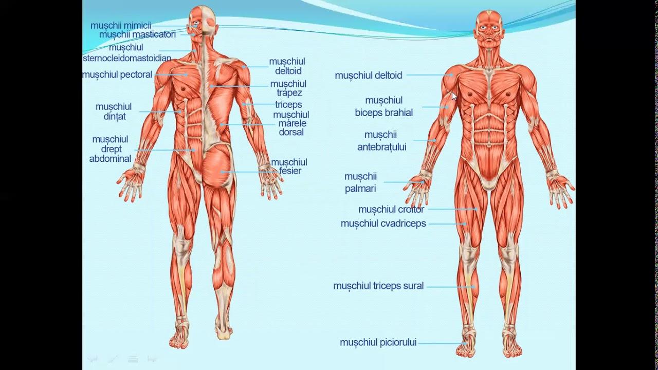 ce aparat pentru dureri articulare leziune la naștere a articulației umărului
