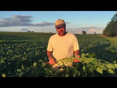 Blue River 43C2 Soybeans (Certified Organic)